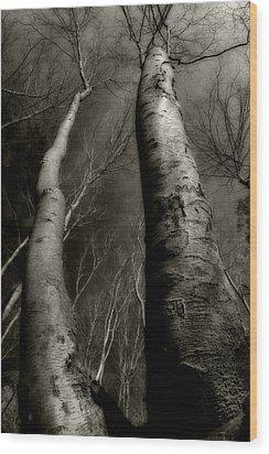 Winter Birch Wood Print by Kim Zier