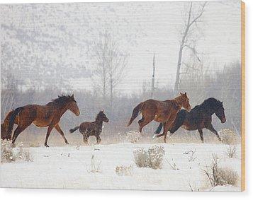 Winter Gallop Wood Print by Mike  Dawson