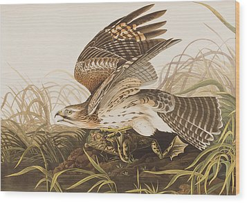 Winter Hawk Wood Print by John James Audubon