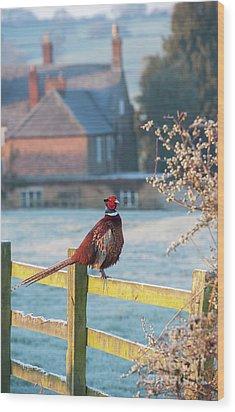 Winter Pheasant Wood Print by Tim Gainey