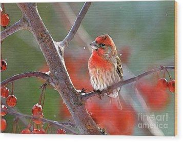 Winter Red Wood Print by Betty LaRue