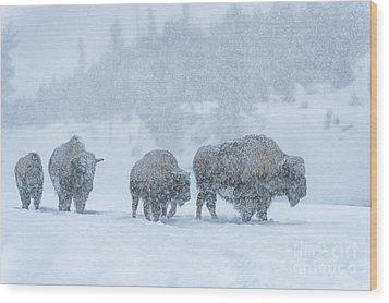 Winter's Burden Wood Print by Sandra Bronstein