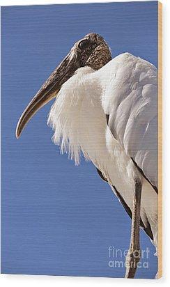 Wonderful Wood Stork Wood Print by Carol Groenen
