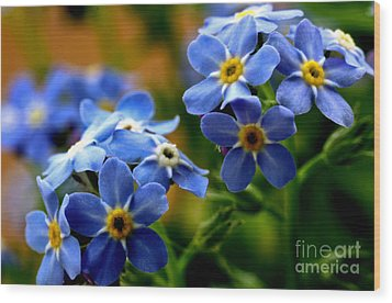 Wood Forget Me Not Blue Bunch Wood Print by Ryan Kelly