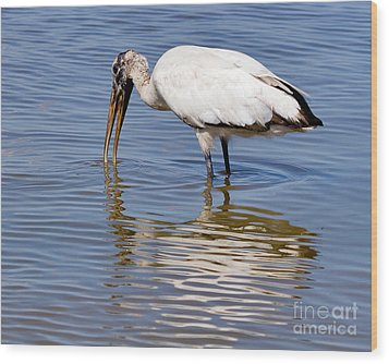 Wood Stork Wood Print by Louise Heusinkveld