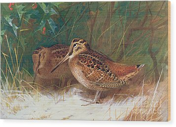Woodcock In The Undergrowth Wood Print by Archibald Thorburn