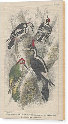 Woodpeckers Wood Print by Oliver Goldsmith