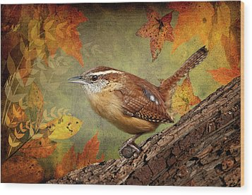 Wren In Autumn  Wood Print by Bonnie Barry