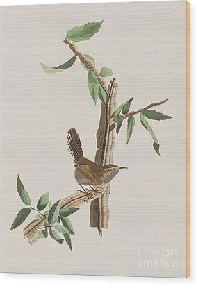 Wren Wood Print by John James Audubon