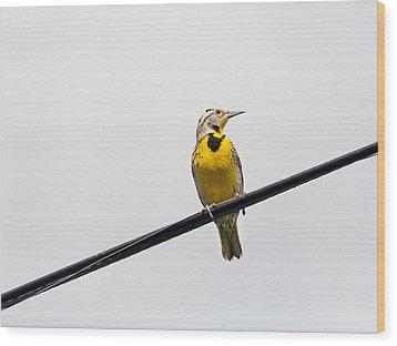 Yellow Bird Wood Print by Rebecca Cozart