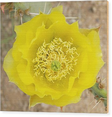 Yellow Cactus Flower Wood Print by Mario Bonaparte