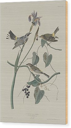Yellow-crown Warbler Wood Print by John James Audubon
