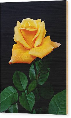 Yellow Rose Wood Print by Michael Peychich