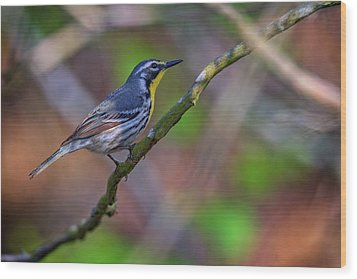 Yellow-throated Warbler Wood Print by Rick Berk