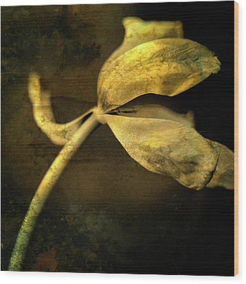 Yellow Tulip Wood Print by Bernard Jaubert