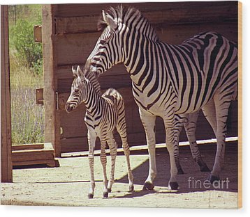 Zebra Mom And Baby Wood Print by Methune Hively