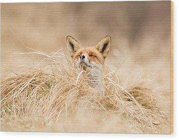 Zen Fox Series - Zen Fox 2.7 Wood Print by Roeselien Raimond
