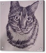 Pet Portraits  Acrylic Print by Lucia Grilletto