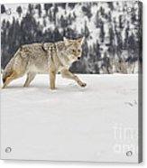 Winter's Determination Acrylic Print by Sandra Bronstein