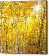 Aspen Morning Acrylic Print by Darren  White