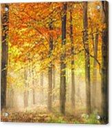 Autumn Gold Acrylic Print by Ian Hufton