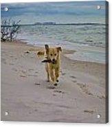Beach Run Acrylic Print by Mary  Swann