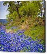 Bluebonnet Meadow Acrylic Print by Inge Johnsson