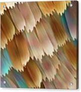 Butterfly Wing Scales Acrylic Print by Power And Syred