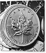 Canadian One Ounce Maple Leaf Silver Coins Acrylic Print by Joe Fox