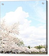 Cherry Blossoms - Washington Dc - 01131 Acrylic Print by DC Photographer