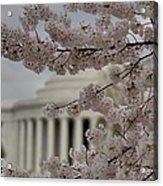 Cherry Blossoms With Jefferson Memorial - Washington Dc - 01134 Acrylic Print by DC Photographer