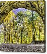 Council Overhang At Starved Rock Acrylic Print by Twenty Two North Photography