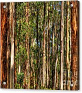 Dandenong Forest Acrylic Print by Colin Woods
