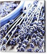 Dried Lavender Acrylic Print by Elena Elisseeva