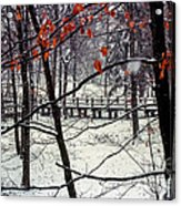 Early Snow Acrylic Print by Bob Phillips