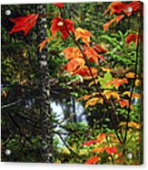 Fall Forest And River Acrylic Print by Elena Elisseeva