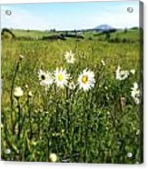 Field Of Flowers Acrylic Print by Les Cunliffe