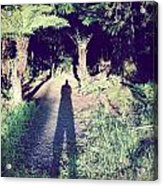 Forest Shadow Acrylic Print by Les Cunliffe