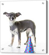 Happy Birthday Acrylic Print by Edward Fielding