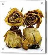 Heap Of Wilted Roses Acrylic Print by Bernard Jaubert