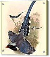 John Gould Birds Acrylic Print by Gary Grayson