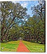 Oak Alley 3 Acrylic Print by Steve Harrington
