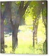 Oaks 25 Acrylic Print by Pamela Cooper
