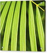 Palm Tree Leaf Acrylic Print by Elena Elisseeva