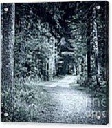 Path In Dark Forest Acrylic Print by Elena Elisseeva