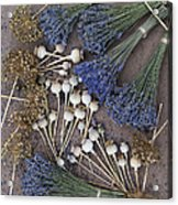 Poppy Seed Pods And Dried Lavender Acrylic Print by Tim Gainey