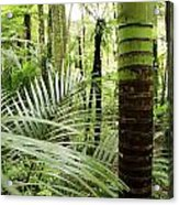 Rainforest  Acrylic Print by Les Cunliffe