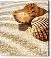 Seashell And Conch Acrylic Print by Carlos Caetano