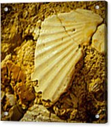 Seashell In Stone Acrylic Print by Raimond Klavins