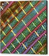 Spirogyra Algae, Light Micrograph Acrylic Print by Science Photo Library